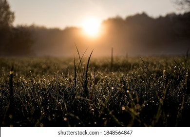 Dark macro picture of dew drops on the grass. Tiny drops of water illuminated by morning sun. Selective focus on small details, blurred background. A meadow near Warsaw, Poland.