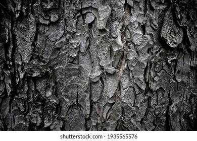 Dark macro shot of tree bark texture pattern