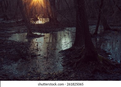 Dark marsh with sunset light .  Swamp background