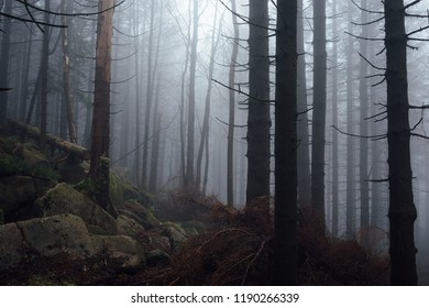 Dark Mist Forest Situation