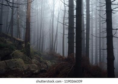 Dark Mist Forest Situation