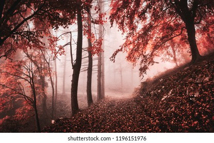 dark and misty atmosphere in the woods with trees and autumn colors