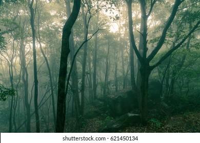 Dark Misty forest with dense fog for background