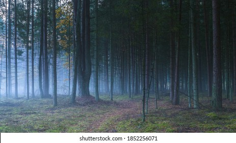 Dark misty forest with white fog, dreamy view