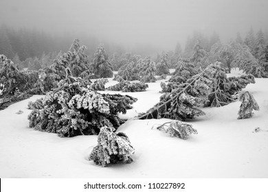 Dark and Misty Forest in Winter Landscape (black & white).