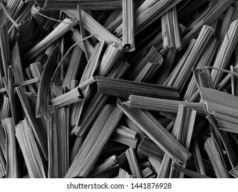 Dark Monochrome Macro Close-up of Dried Leaves of West Indian Lemon Grass, Cymbopogon citratus, Background