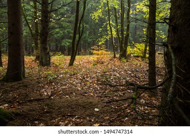 Dark mood in the autumn forest