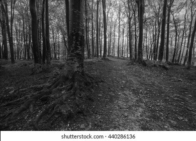 Dark mood forest