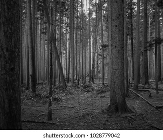 A dark and moody forest
