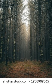 A dark and moody forest path with the sunlight peaking through the canopy on the the forest floor
