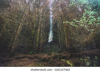 Dark moody forest in Scotland