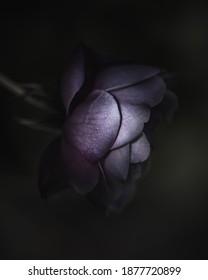 Dark and moody purple flower