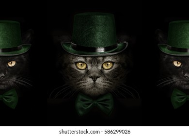 5d2abf1f St Patrick's Day Cat Images, Stock Photos & Vectors | Shutterstock