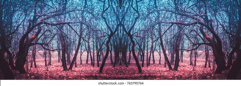 Dark mysterious forest in a fog. Stranger winding branches of trees in the mist. Background mystic atmosphere