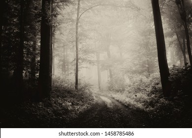 dark mysterious forest landscape with path in fog