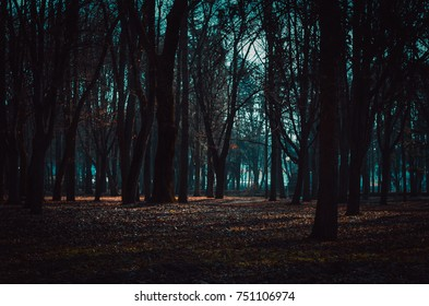 Dark mysterious forest lit by moonlight. Fantastic foggy forest in the mist