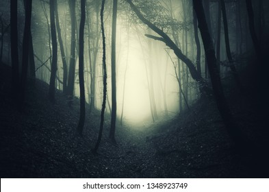 dark mysterious forest path leading to wonderland