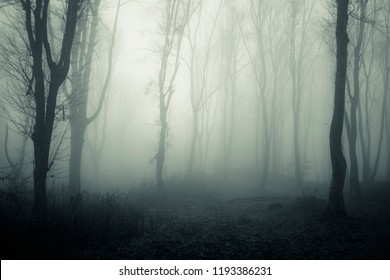 dark mysterious forest with trees in fog