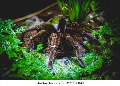 dark and mysterious tarantula
