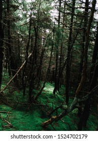 Dark and mystic green carpatian forest with magical  soft moss. Carpathian mountains