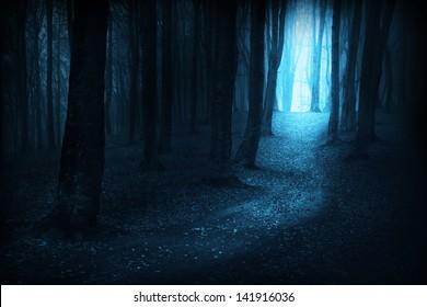 Dark, mystic, magic, fairytale trails into the forest into an autumn foggy day
