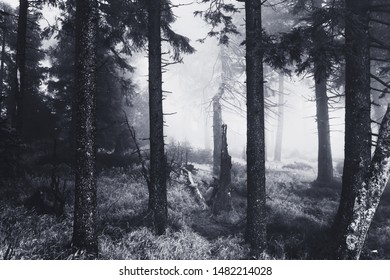 Dark mystical cloud forest in the upper Harz mountains on the mountain Brocken