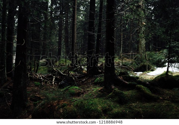 Dark mystical forest