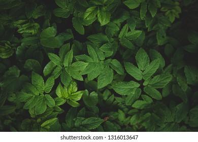 Dark nature pattern, leaves background