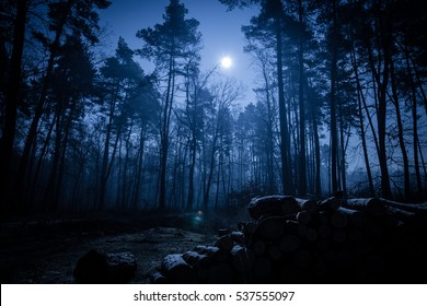 forest night images stock photos vectors shutterstock