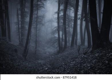 dark night in a forest