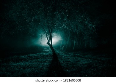 Dark night in forest at fog time. Surreal night forest scene. Horror halloween concept. Magical lights sparkling in mysterious forest at night. Long exposure shot