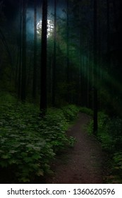 Dark night in forest with moon light