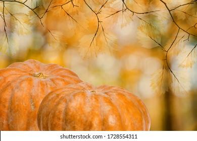dark orange pumpkins on autumn background