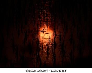 Dark orange sunlight reflection in water of a crops field unique natural photo