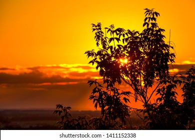 Dark orange sunset or sunrise, the rays of the sun hidden behind the clouds make their way through the silhouette of tree branches. Victory Park Ufa, Bashkortostan, Russia.
