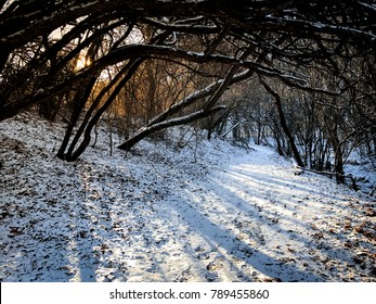 Dark overgrown trees over a snow covered path