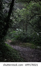 Dark Path in the Cloud Forest