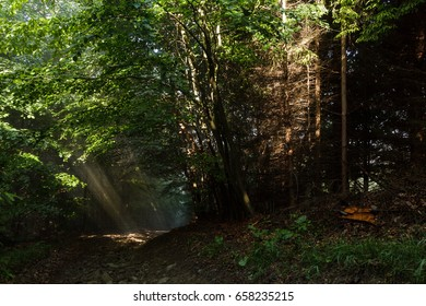 Dark path in a foggy forest with sunlight rays