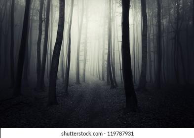 dark path through forest