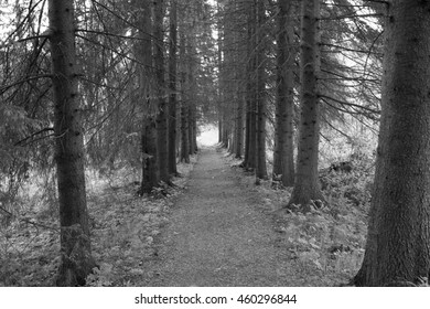 Dark path through the woods, to the light
