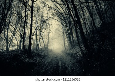 dark path in the woods, scary halloween landscape
