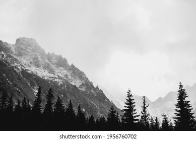 Dark pine trees forest in winter. mountains landscape with snow-capped mountain peaks in the background