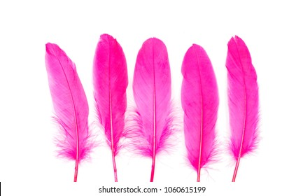 Dark pink feathers on a white background