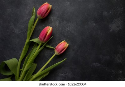 Dark pink tulips with yellow tips on a dark, grungy background.