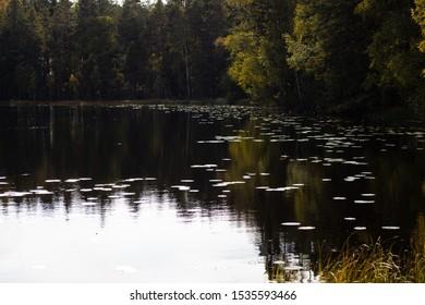 Dark pond in the forest