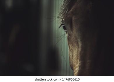 Dark Racing Horse Head and Eye Closeup. Riding Facility. Industry Theme.