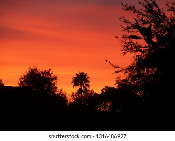 Dark Red Florida sunset with lone palm silhouette