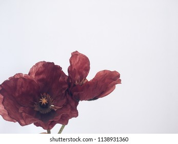 Dark red flowers on the with background
