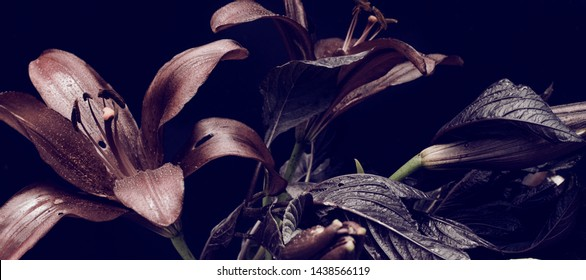 dark red lilies on a dark background, abstract floral arrangement