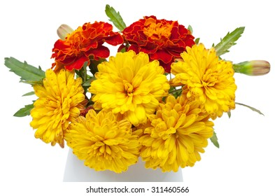 Dark red marigolds and chrysanthemums in a ceramic vase, flowerpot. Isolated on white background, close-up.